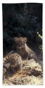 Arabian Leopard Panthera Pardus Beach Towel