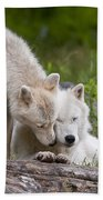 Arctic Wolves Beach Towel