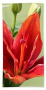 Asiatic Lily Named Red Twin Beach Towel