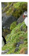 Atlantic Puffin, Fratercula Arctica Beach Towel