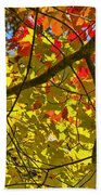 Autumn Maple Leaves Beach Towel