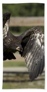 Bald Eagle In Flight Photo Beach Towel