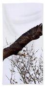 Bald Eagle Soaring Beach Towel