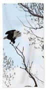 Bald Eagles Beach Towel