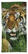 Bengal Tiger Beach Towel
