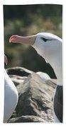 Black Browed Albatross Pair Beach Towel