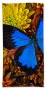 Blue Butterfly On Mums Beach Towel
