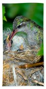 Broad-billed Hummingbird And Young Beach Towel