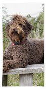 Brown Labradoodle Beach Towel