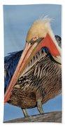 Brown Pelican Preening Beach Towel