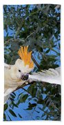 Cacatoes A Huppe Orange Cacatua Beach Towel