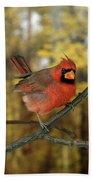 Cardinal Rouge Cardinalis Cardinalis Beach Towel