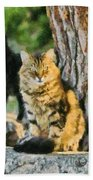 Cats In Hydra Island Beach Towel