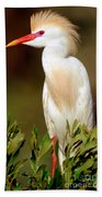 Cattle Egret Adult In Breeding Plumage Beach Towel