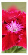 Cherry Dianthus From The Floral Lace Mix Beach Towel