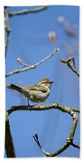 Chipping Sparrow Perched In A Tree Beach Towel