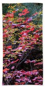 Colorful Leaves On A Tree Beach Towel