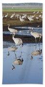 Common Crane Grus Grus Beach Towel