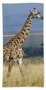 Common Giraffe Beach Towel