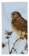 Common Kestrel Falco Tinnunculus Beach Towel