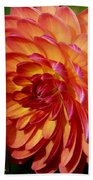 Dahlia Profile Beach Towel