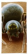 Dictynid Spider Beach Towel by David M. Phillips