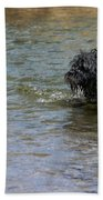Dog Ball Water Beach Towel