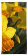 Dwarf Cyclamineus Daffodil Named Jet Fire Beach Towel