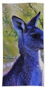 Eastern Grey Kangaroo Beach Towel