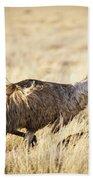 Emu Chicks Beach Towel by Tim Hester