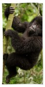 Endangered Mountain Gorillas Habitate Beach Towel