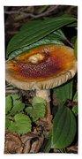 Fairy Mushrooms Beach Towel