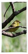 Female American Goldfinch Beach Towel
