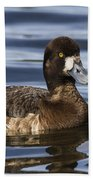Female Scaup Beach Towel
