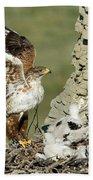 Ferruginous Hawk And Chicks Beach Towel