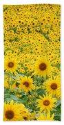 Field Of Sunflowers Helianthus Sp Beach Towel
