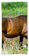 Florida Spanish Horse Beach Towel
