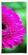 10188 Purple Gerbera Beach Towel