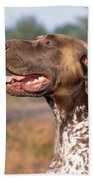 German Short-haired Pointer Dog Beach Towel