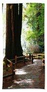 Giant Redwoods Beach Towel