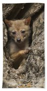Golden Jackal Canis Aureus Cubs Beach Towel