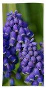 Grape Hyacinth Beach Towel