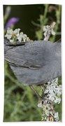 Gray Catbird Beach Towel
