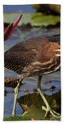 Green Heron Photo Beach Towel