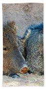 Javelina Beach Towel