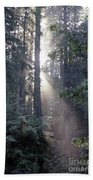 Jedediah Smith Redwoods State Park Redwoods National Park Del No Beach Towel