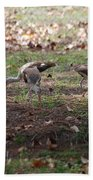 Juvenile Ibis Beach Towel