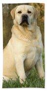 Labrador Retriever Dog Beach Towel