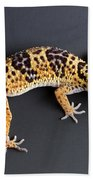 Leopard Gecko Eublepharis Macularius Beach Towel