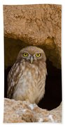 Little Owl Athene Noctua Beach Towel